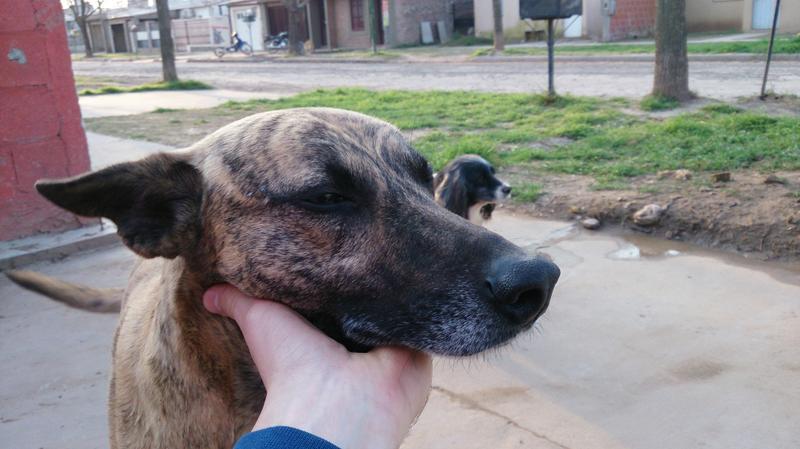 """Perros rescatados por """"Oportunidad Oportuna"""""""