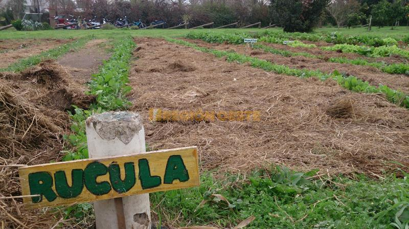 Huerta Orgánica en el Arboretum de Rafaela