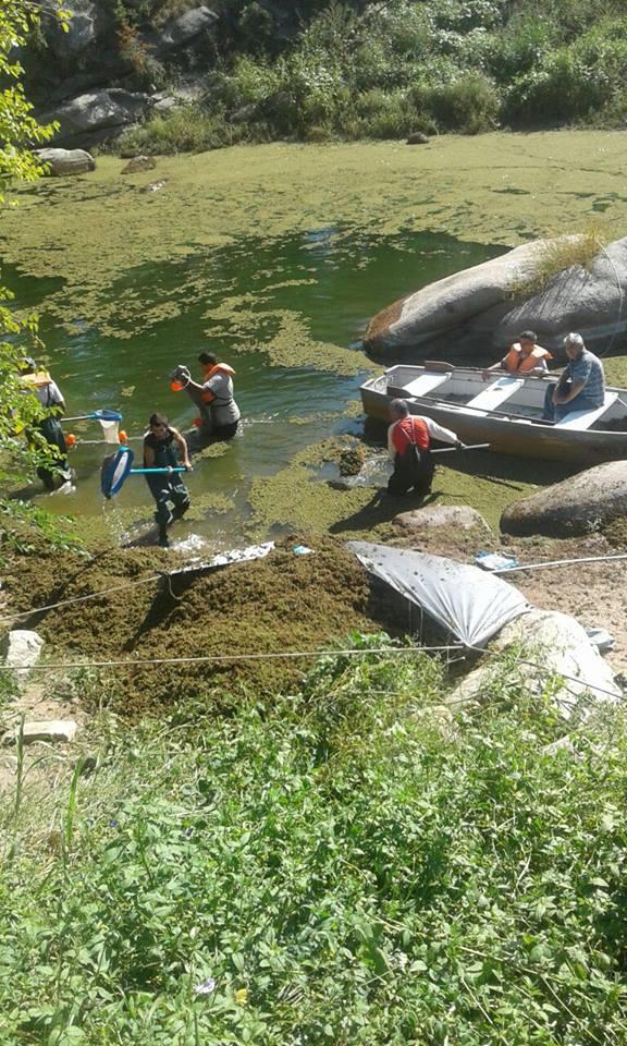 Limpieza de algas en Carlos Paz