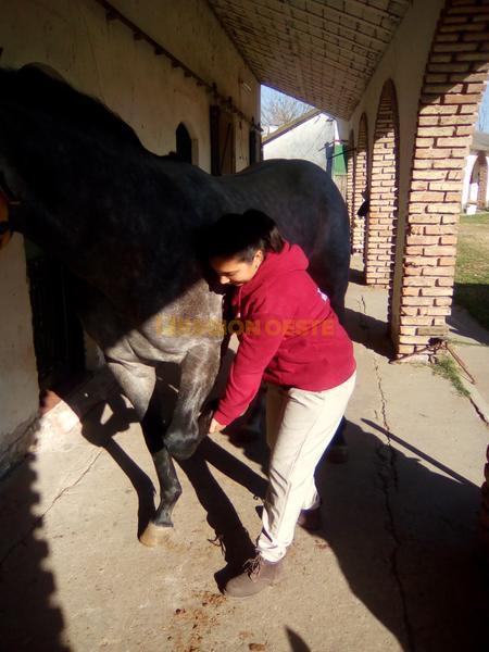 Isabel con caballos de carrera argentinos